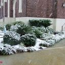 Snow at SFA photo album thumbnail 7